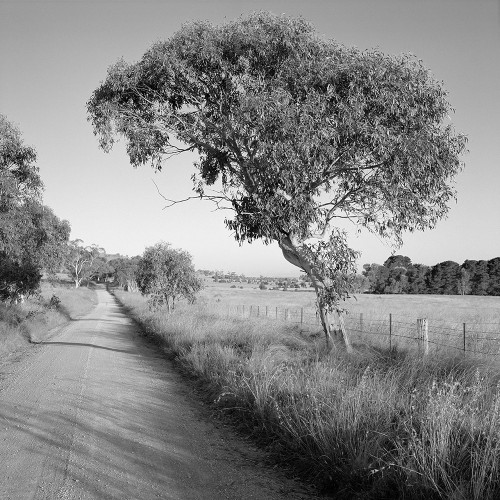 Sandholes Road - Stephen Best